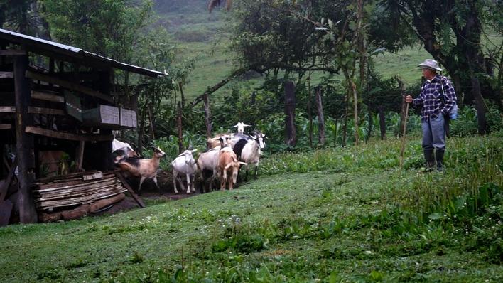 Don Isidro: una vida pastoreando