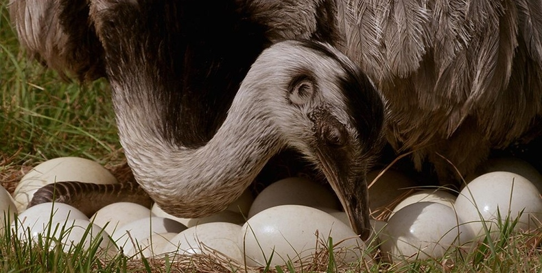 Natural World: Attenborough's Big Birds