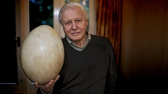 Attenborough y el huevo gigante