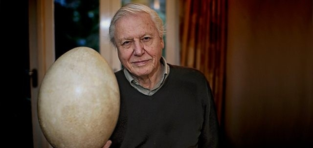Attenborough y el huevo gigante