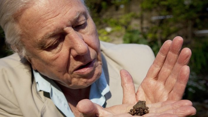 David Attenborough's Natural Curiosities