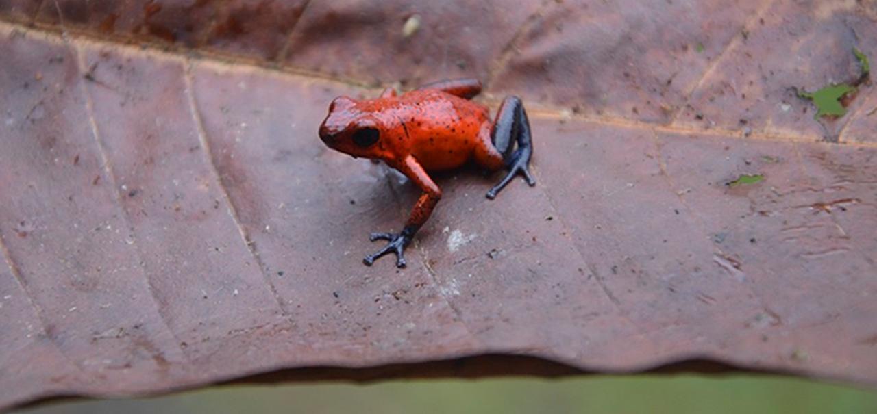Natural World: Attenborough's Fabulous Frogs