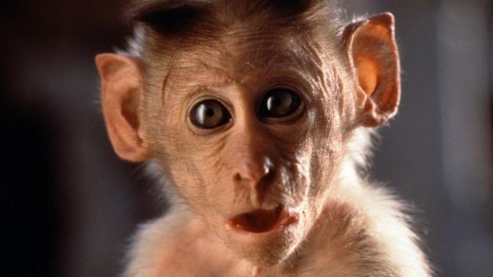 Hanuman, la leyenda del Dios Mono