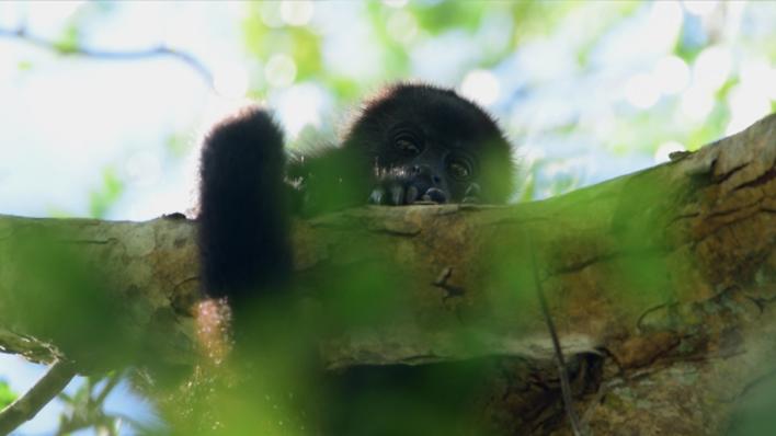 Voces de la selva