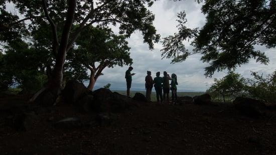 Los hijos del manglar