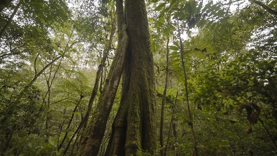Los nuevos bosques